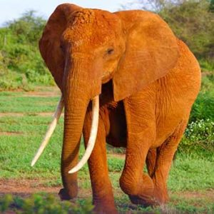 """The """"God is an Elephant"""" Analogy (Dismantling the myth that all religions are equal)"""