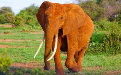 "Have You Heard The ""God Is An Elephant"" Analogy?"