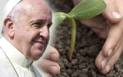 """20 """"Laudato Si"""" Quotes That You Can't Miss!"""
