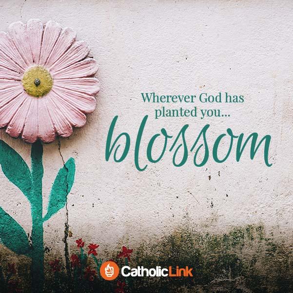 Wherever God has planted you blossom