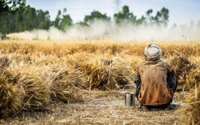 Wrestling With Fear And The Mystery Of Injustice: The Parable Of The Wheat And The Weeds