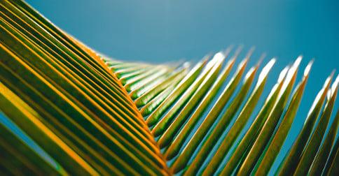 Gospel reflection Palm Sunday