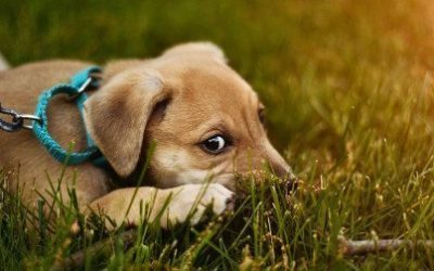 What Did Dog Training Teach Me About The Spiritual Life?