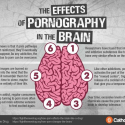 Infographic: The Effects Of Pornograhy In The Brain