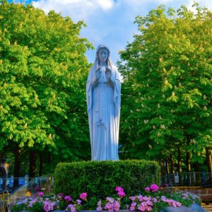 How to plant a Mary Garden